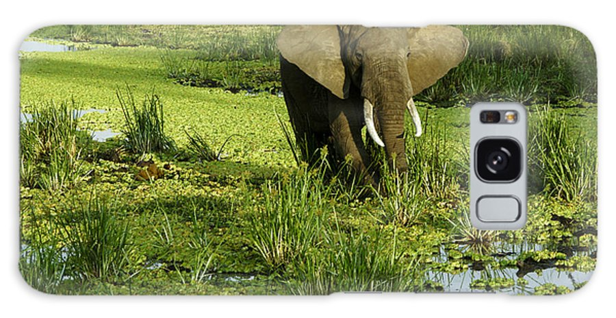 Africa Galaxy S8 Case featuring the photograph African Elephant In Swamp by Michele Burgess