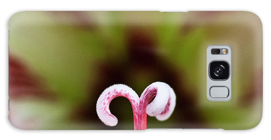 Amaryllis Galaxy S8 Case featuring the photograph Amaryllis Flower by Heiko Koehrer-Wagner