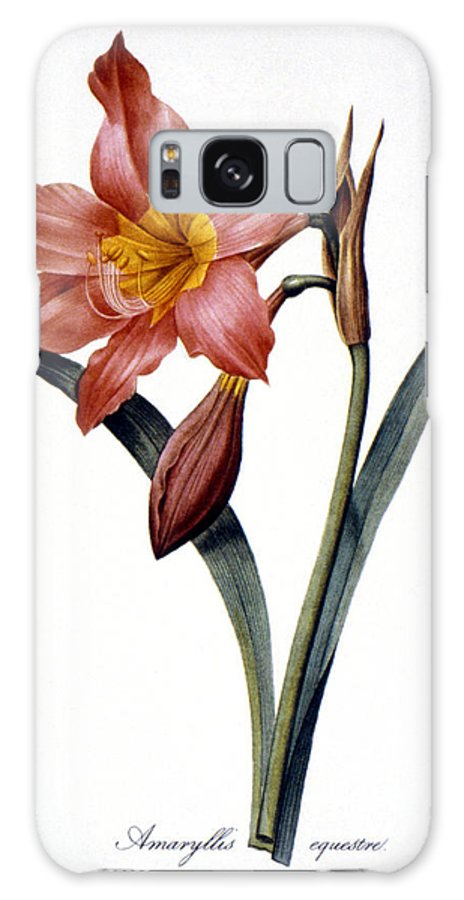 1833 Galaxy S8 Case featuring the photograph Amaryllis by Granger