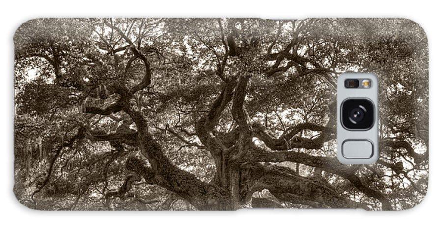 Angel Oak Galaxy S8 Case featuring the photograph Angel Oak Live Oak Tree by Dustin K Ryan