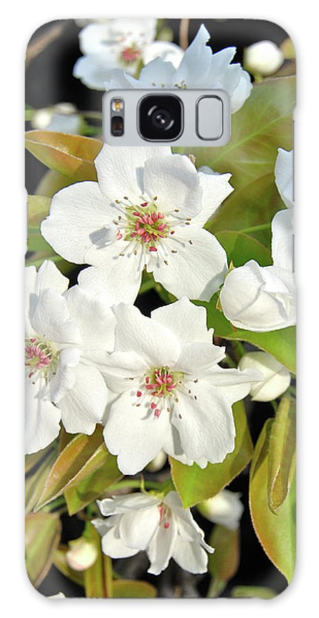 Apple Galaxy S8 Case featuring the photograph Apple Blossoms 0936 by Michael Peychich
