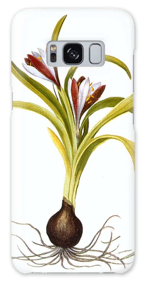 Biology Galaxy S8 Case featuring the photograph Autumn Crocus by Granger
