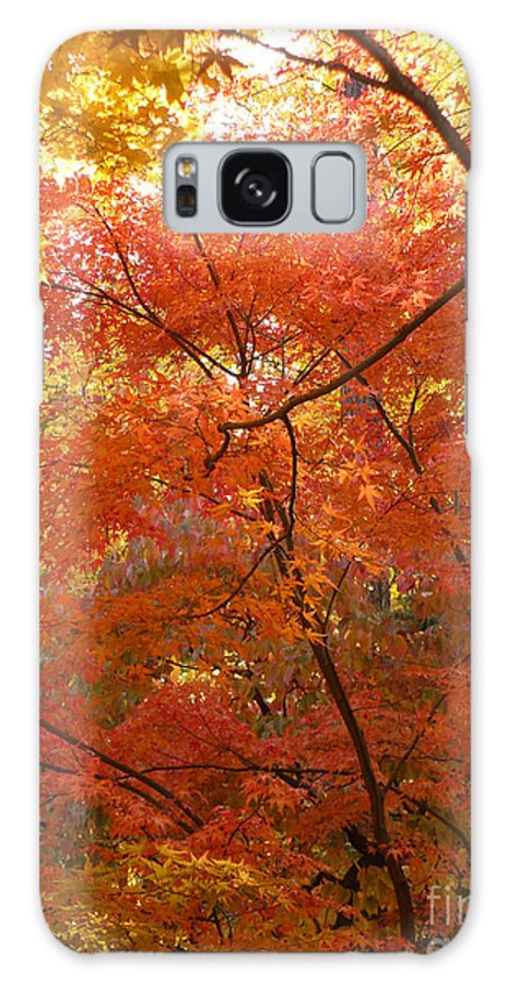 Autumn Galaxy S8 Case featuring the photograph Autumn Gold by Carol Groenen