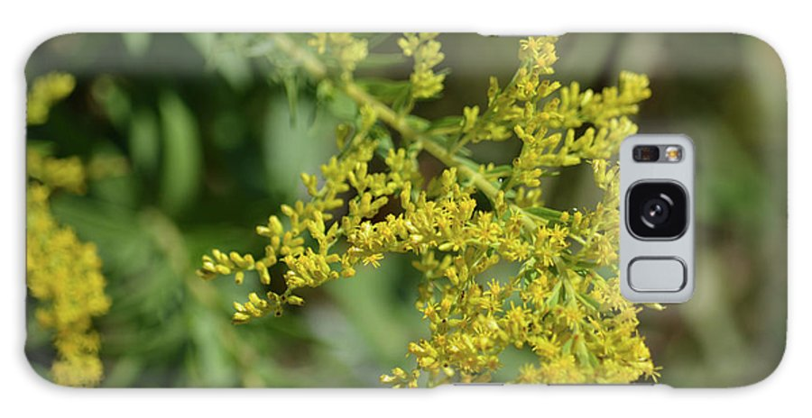 Autumn Goldenrod Prints Galaxy S8 Case featuring the photograph Autumn Goldenrod by Ruth Housley