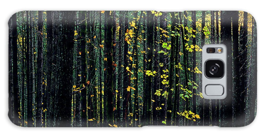 Nature Galaxy S8 Case featuring the photograph Autumn Leaves by Jim Corwin