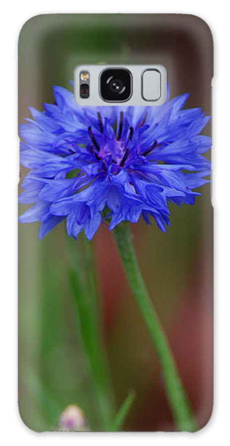 Bachelor Button Galaxy S8 Case featuring the photograph Bachelor Button Blues Lll by Michelle Hastings