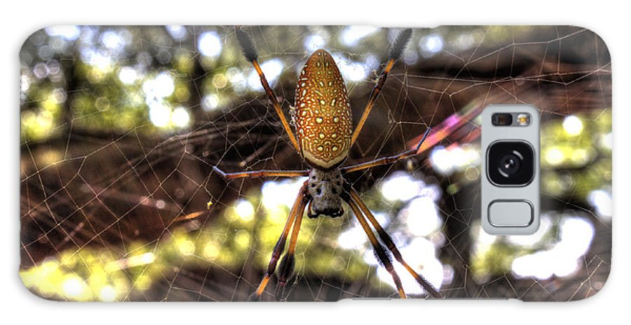 Golden Silk Orb Weave Galaxy S8 Case featuring the photograph Banana Spider by Dustin K Ryan