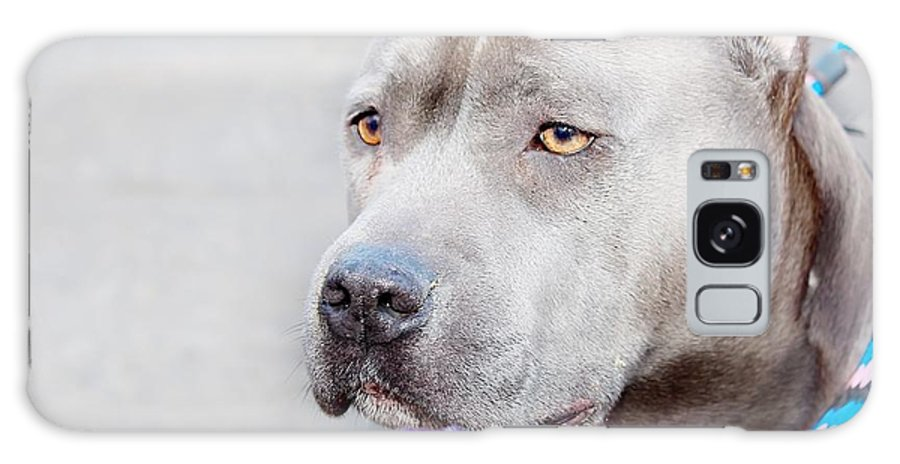 Dog Galaxy S8 Case featuring the photograph Betty by Joyce Baldassarre