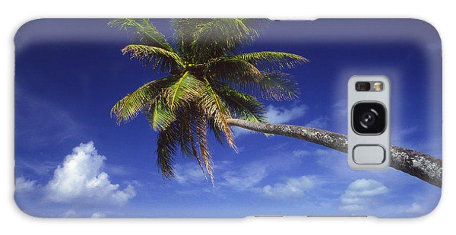 Beach Galaxy S8 Case featuring the photograph Bora Bora, Palm Tree by Ron Dahlquist - Printscapes