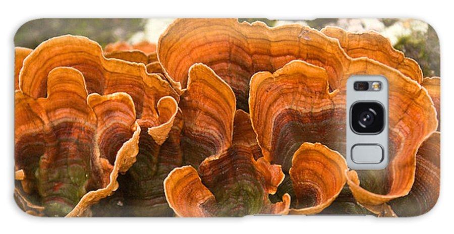 Bracket Galaxy S8 Case featuring the photograph Bracket Fungi by Douglas Barnett