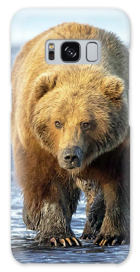 Brown Bear Galaxy S8 Case featuring the photograph Brown Bear by Jack Bell