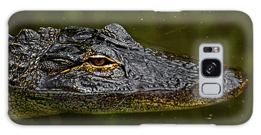 Alligator. Gator Galaxy S8 Case featuring the photograph Brown Eye by Christopher Holmes