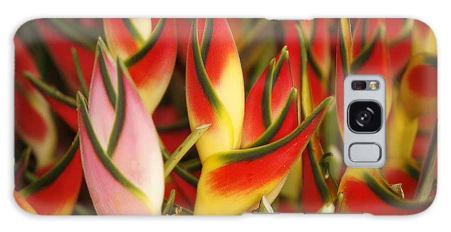 Beautiful Galaxy S8 Case featuring the photograph Bunch Of Heliconia by Ron Dahlquist - Printscapes