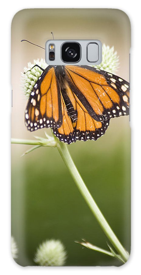 Chad Davis Galaxy S8 Case featuring the photograph Butterfly In Wait by Chad Davis