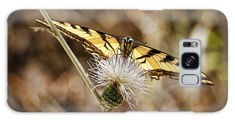 Butterfly Galaxy S8 Case featuring the photograph Swallowtail Butterfly by Kelley King