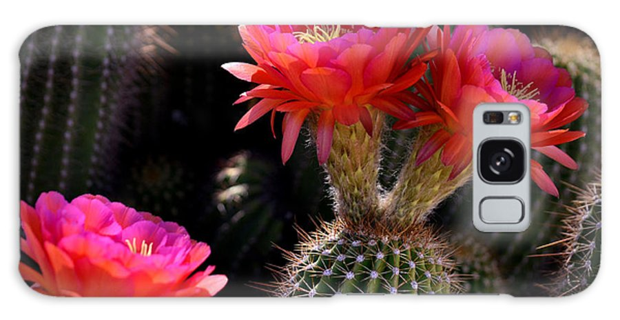 Red Galaxy S8 Case featuring the photograph Sonoran Spring by Deb Halloran
