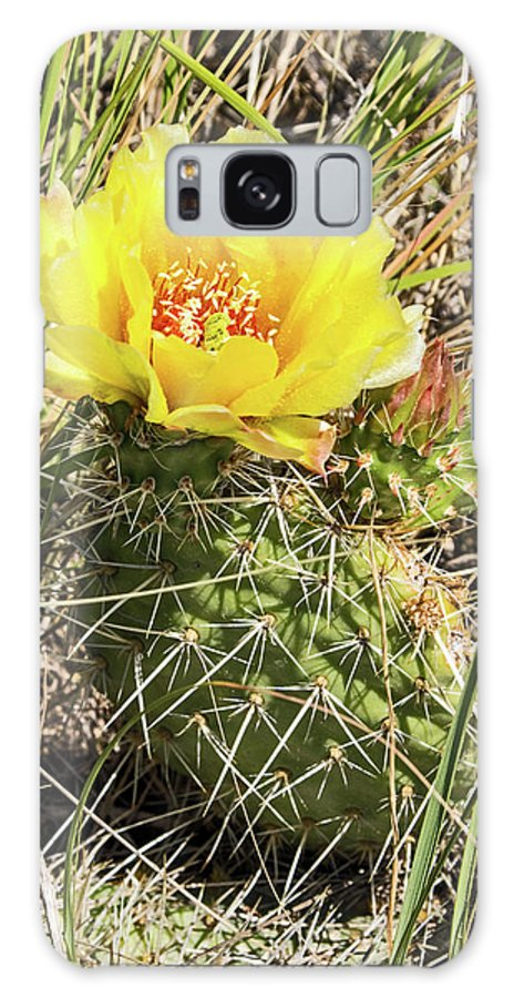 Cactus Galaxy S8 Case featuring the photograph Cactus Flower by Ira Marcus