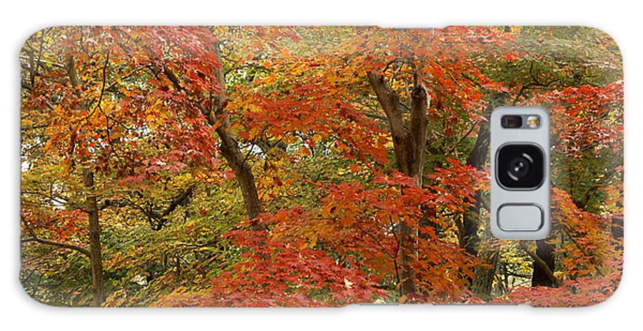 Autumn Galaxy S8 Case featuring the photograph Colors Of Autumn by Michele Burgess