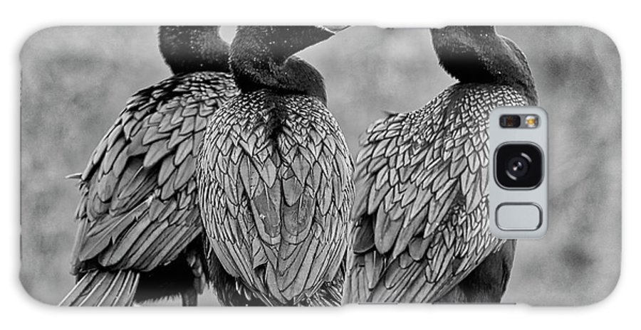Bird Galaxy S8 Case featuring the photograph Cormorant Trio by Lindy Pollard