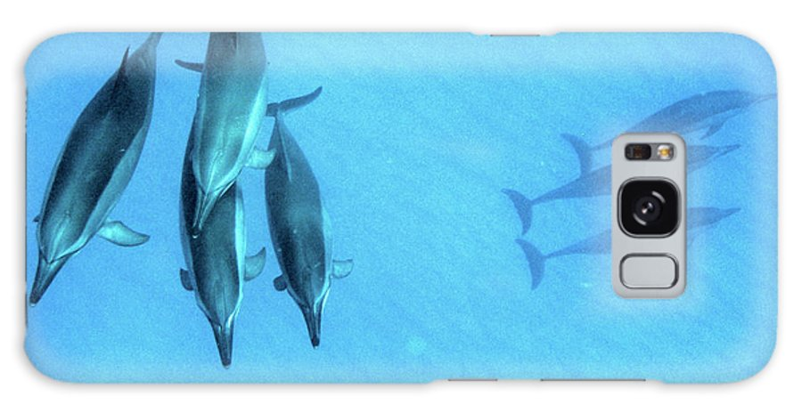 Hawaii Dolphins Underwater Galaxy S8 Case featuring the photograph Dolphins At Rest by DeWaine Tollefsrud