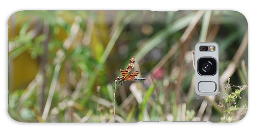 Nature Galaxy Case featuring the photograph Dragon Fly by Rob Hans