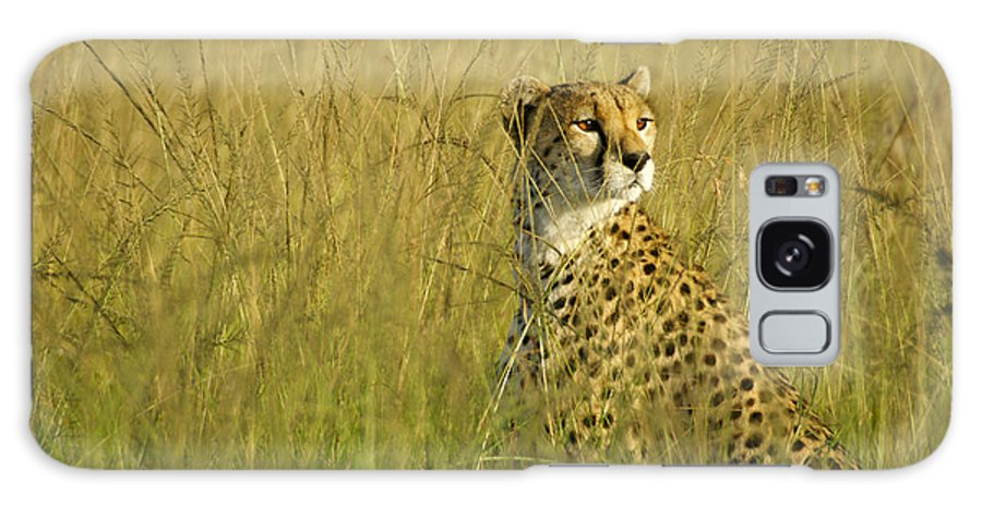 Africa Galaxy S8 Case featuring the photograph Elegant Cheetah by Michele Burgess