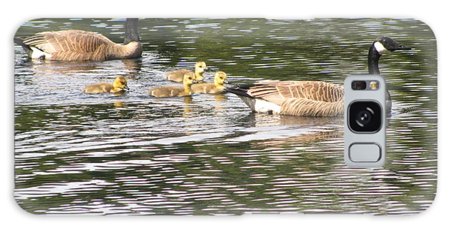 Geese Galaxy S8 Case featuring the photograph Family Of Geese by Tammy Bullard