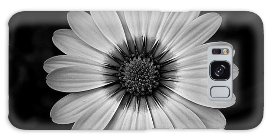 Flower Galaxy S8 Case featuring the photograph Fascinating Legacy by Michiale Schneider