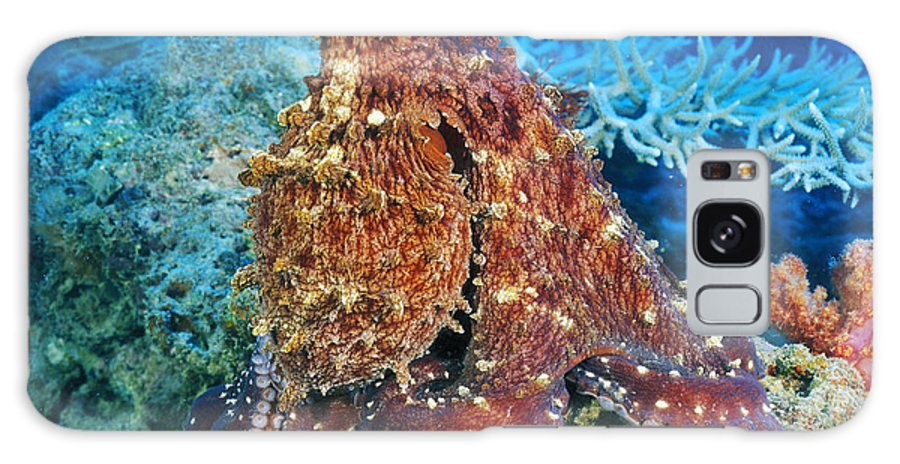 30-pfs0115 Galaxy S8 Case featuring the photograph Fiji, Day Octopus by Dave Fleetham - Printscapes