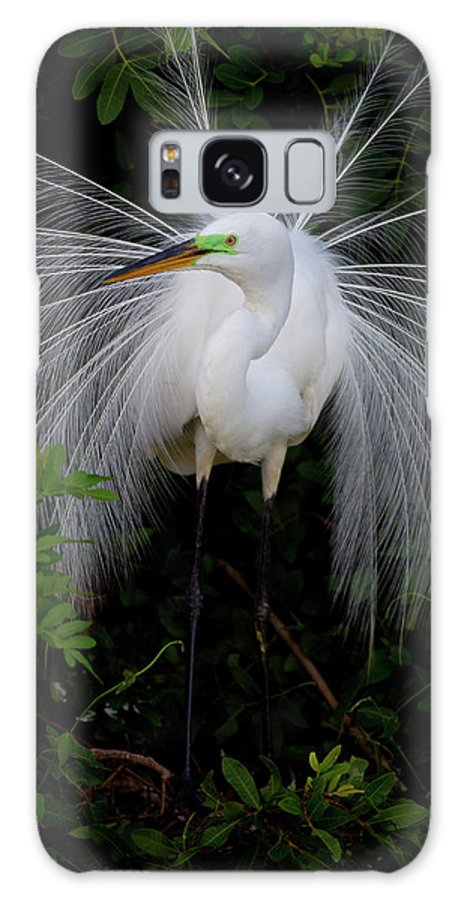 Great Egret Galaxy S8 Case featuring the photograph Great Egret by Dennis Goodman