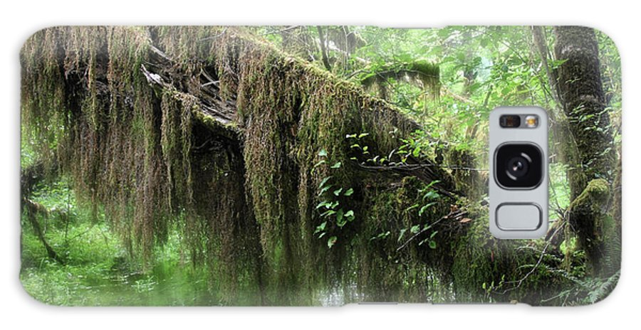Rainforest Galaxy S8 Case featuring the photograph Hall Of Mosses - Hoh Rain Forest Olympic National Park Wa Usa by Christine Till