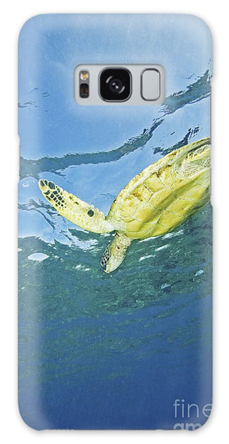 66-csm0245 Galaxy S8 Case featuring the photograph Hawaii, Green Sea Turtle by Ron Dahlquist - Printscapes