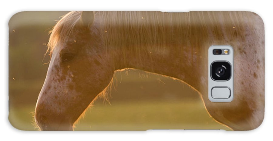 Horse Galaxy S8 Case featuring the photograph Horses In The Evening Light by Angel Ciesniarska