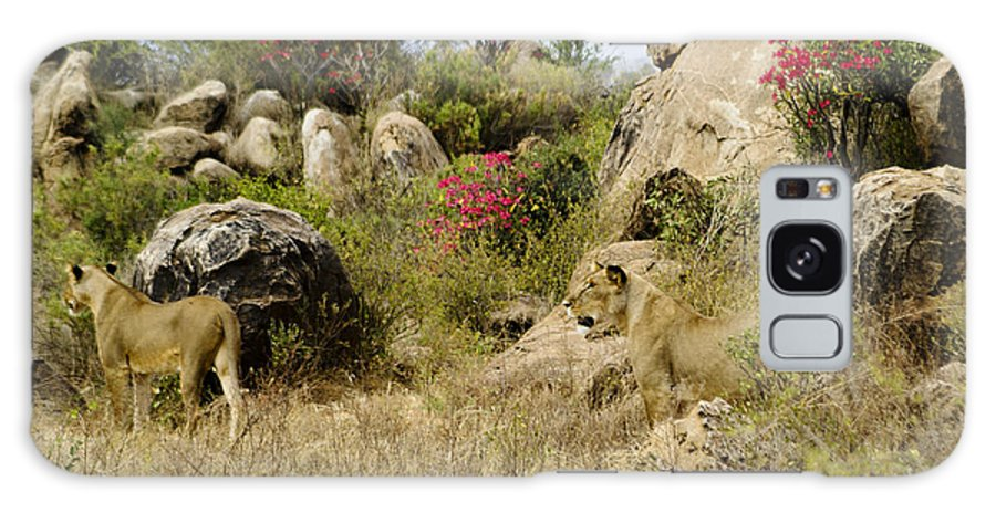 Lion Galaxy S8 Case featuring the photograph Hunting Lionesses by Michele Burgess