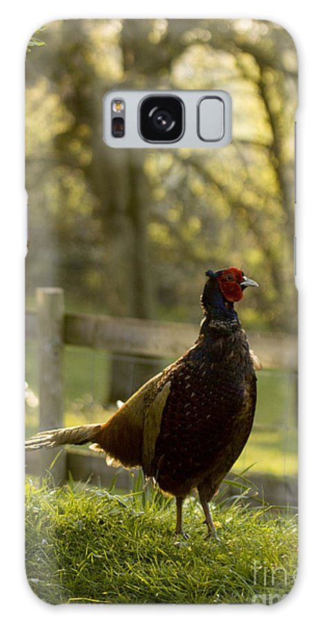Pheasant Galaxy S8 Case featuring the photograph In My Garden by Angel Ciesniarska