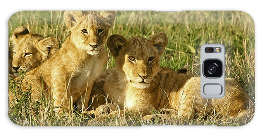 Lion Galaxy S8 Case featuring the photograph Little Lions by Michele Burgess