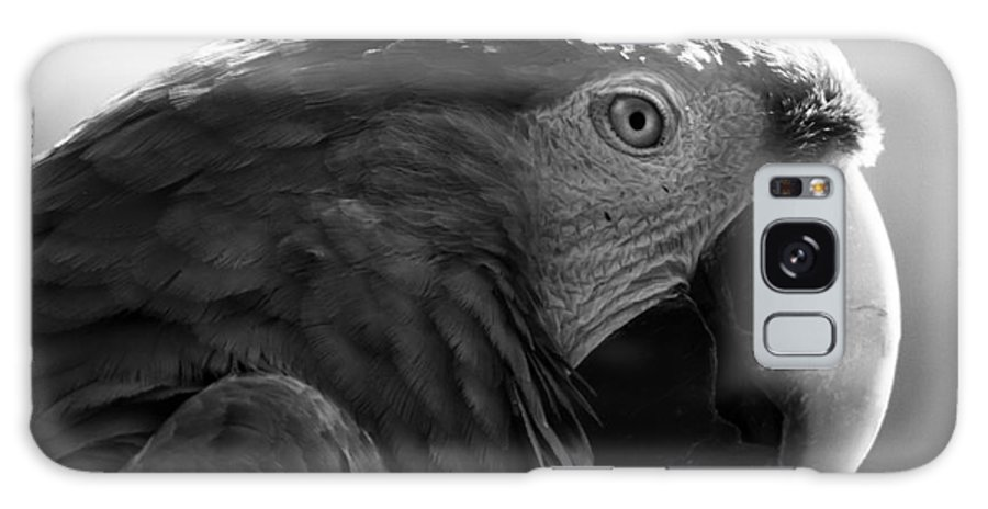 Macaw Galaxy S8 Case featuring the photograph Macaw by Angel Ciesniarska