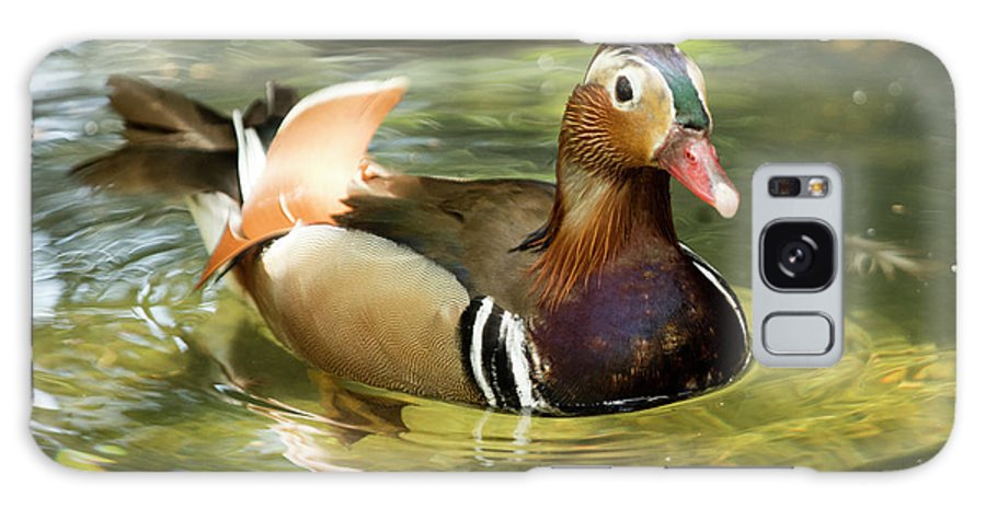 Duck Galaxy S8 Case featuring the photograph Mandarin Duck by Julian Regan