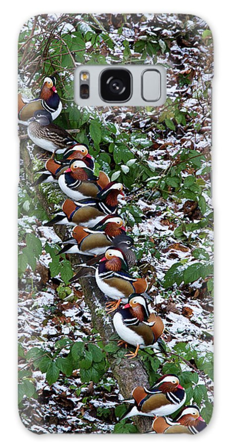 Birds Galaxy S8 Case featuring the photograph Mandarin Ducks by Bob Kemp