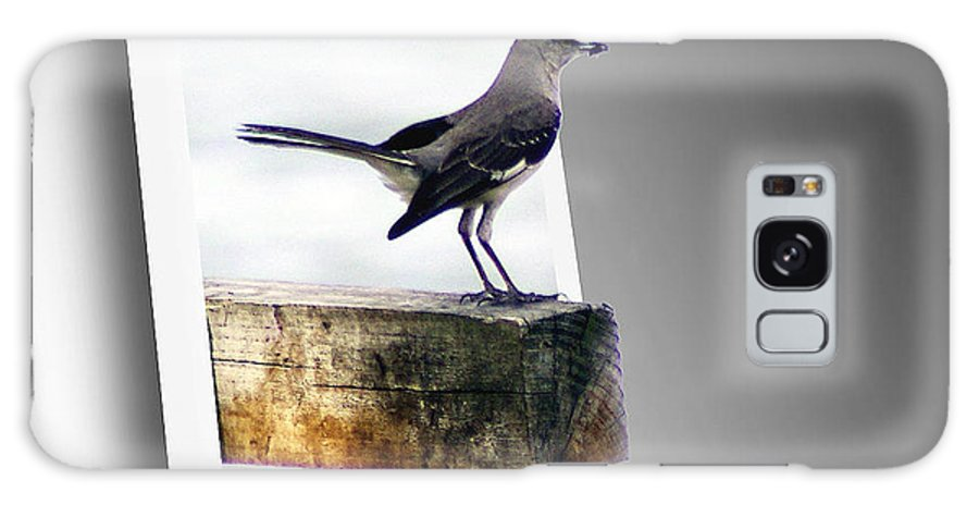 2d Galaxy S8 Case featuring the photograph Mockingbird by Brian Wallace