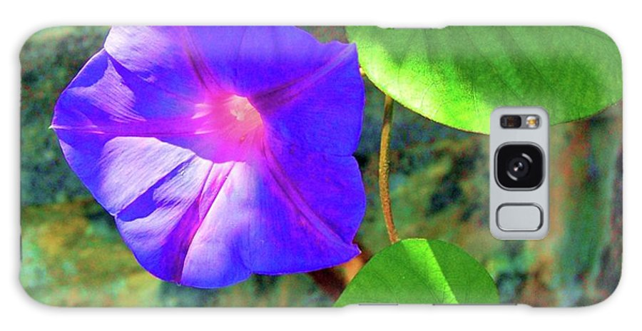 Morning Glory Galaxy S8 Case featuring the photograph Morning Glory by Debbi Granruth