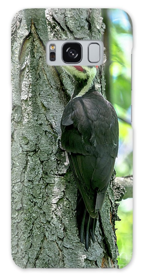 Cheryl Baxter Photography Galaxy S8 Case featuring the photograph Mr. Pileated Woodpecker by Cheryl Baxter