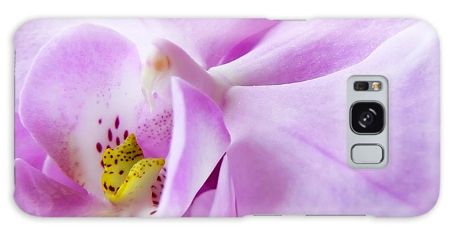 Orchid Galaxy S8 Case featuring the photograph Orchid by Daniel Csoka