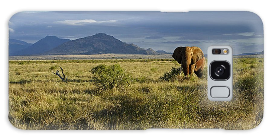 Africa Galaxy S8 Case featuring the photograph Patriarch Of The Plains by Michele Burgess