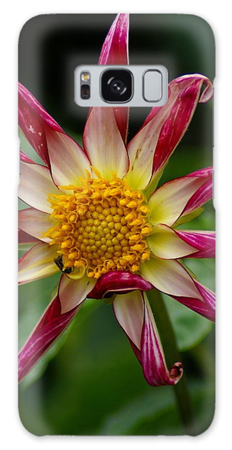 Flowers Galaxy S8 Case featuring the photograph Peppermint Sunburst by Ben Upham III