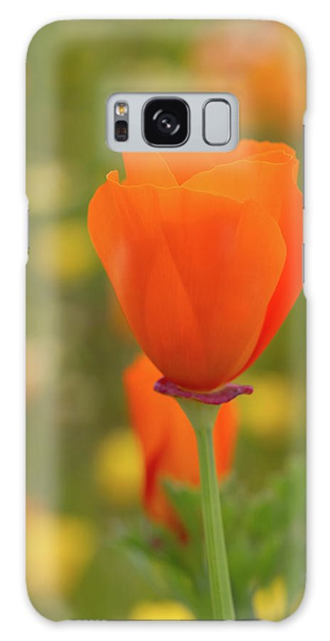 Wildflowers Galaxy S8 Case featuring the photograph Poppy by Roger Mullenhour