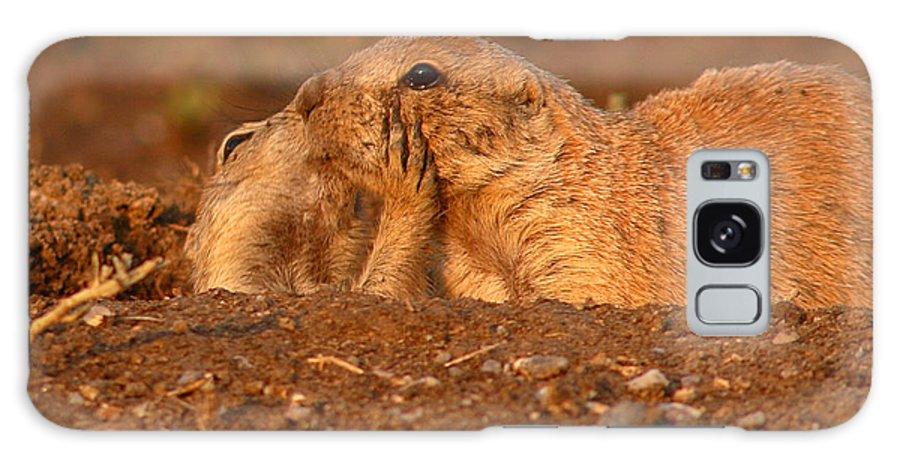 Prairie Dog Galaxy S8 Case featuring the photograph Prairie Dog Tender Sunset Kiss by Max Allen