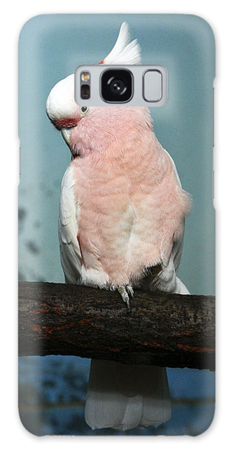 Bird Galaxy S8 Case featuring the photograph Pretty In Pink by Marilyn Hunt