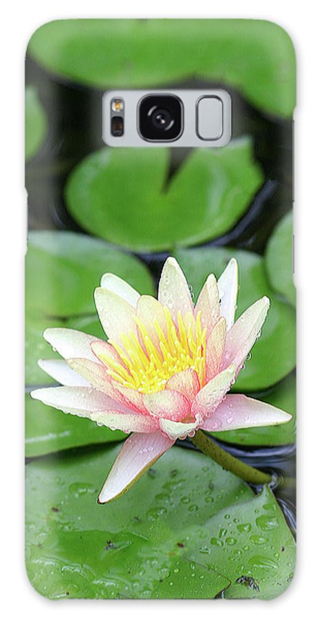 Lily Galaxy S8 Case featuring the photograph Pretty In Pink by Shari Jardina