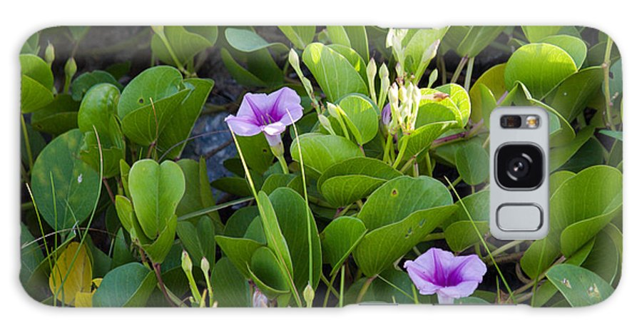Railroad; Vine; Morning; Glory; Ipomoea; Pes-caprae; Pes; Caprae; Flower; Florida; Shore; Beach; Bea Galaxy S8 Case featuring the photograph Railroad Vine by Allan Hughes